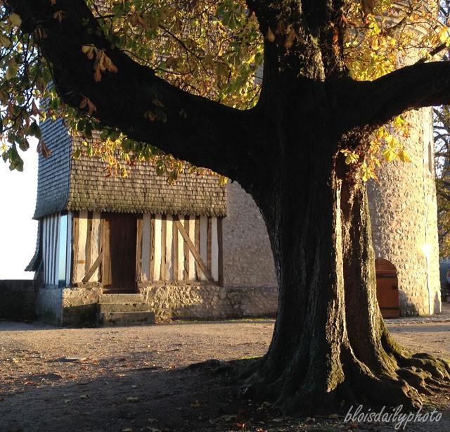 tree_castle