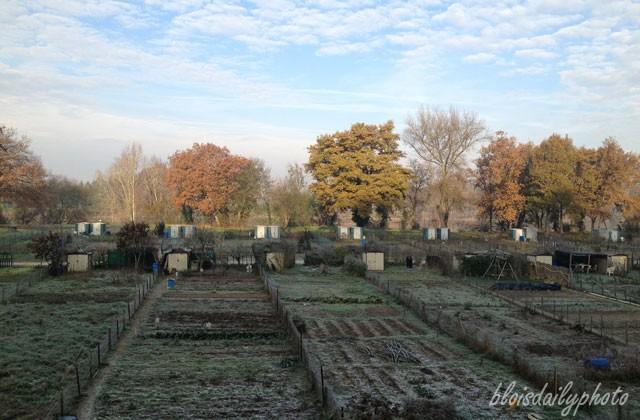 photo_142_market_garden