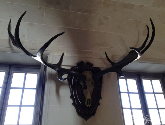 photo_4_antlers_cheverny