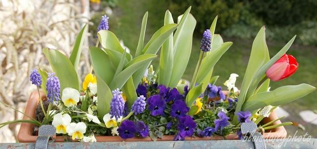 photo_90_jardiniere