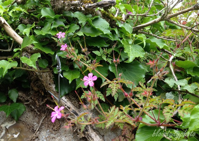 photo_133_mystery_flower