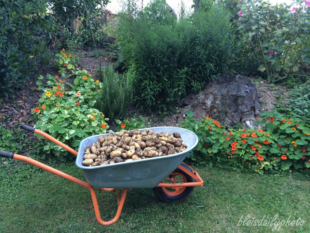 photo_218_potatoes