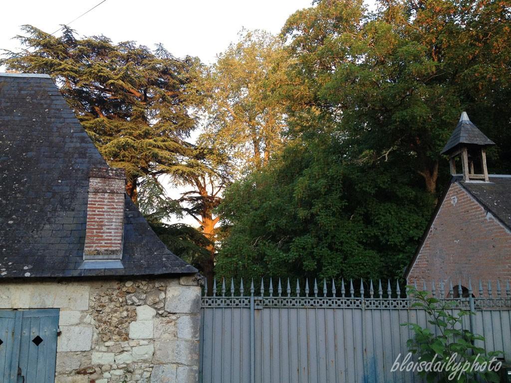 photo_254_sunset_trees