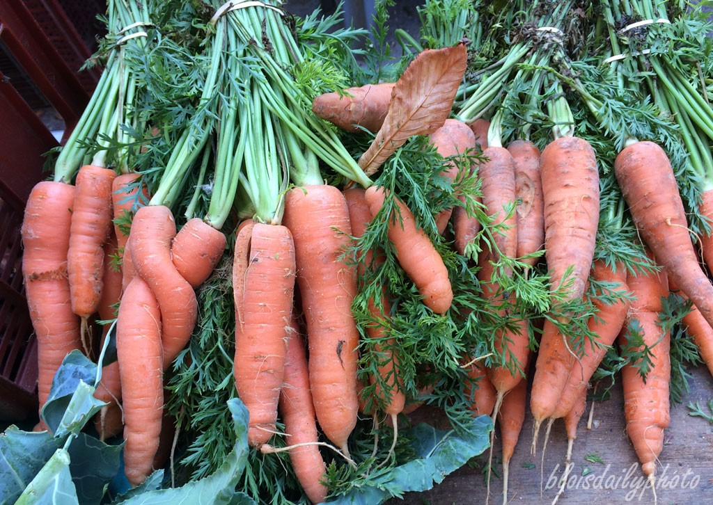 photo_260_entwined_carrots