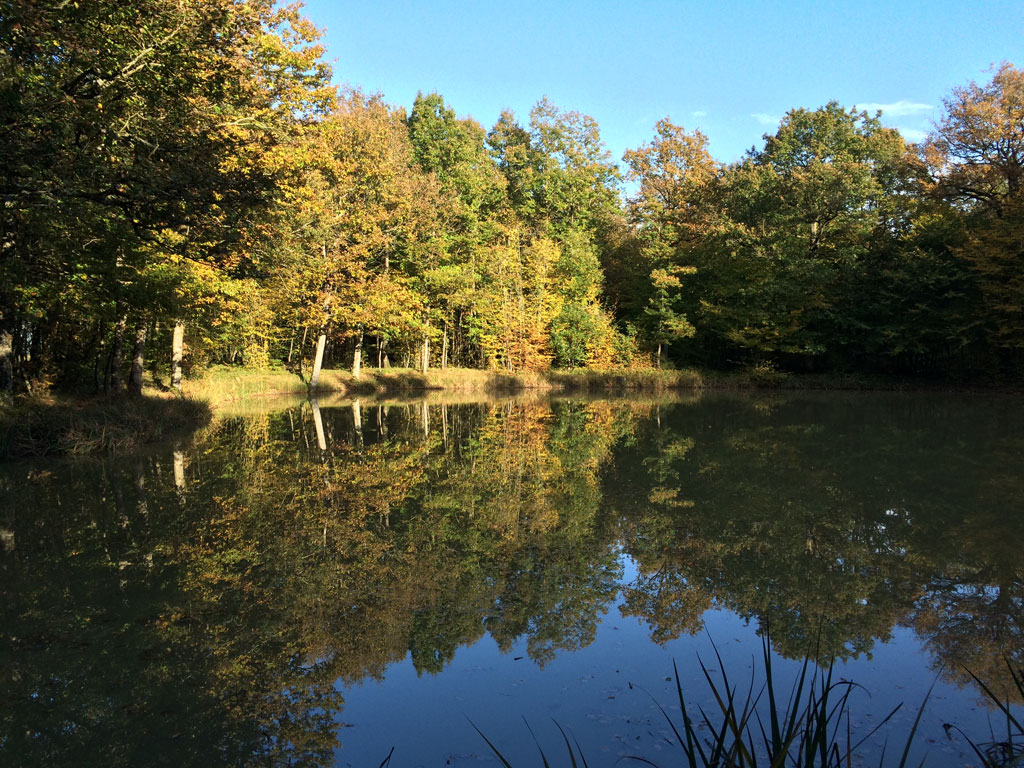photo_289_autumn_pond