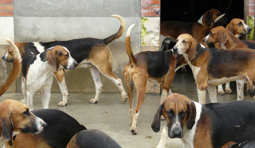 photo_294_hounds_cheverny