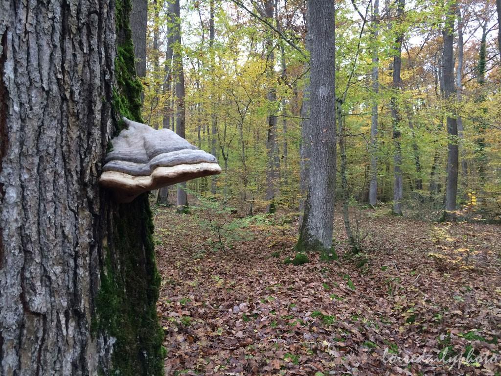 photo_300_funny_mushroom