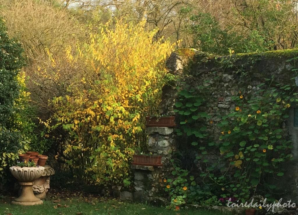 photo_310_wall_nastursiums