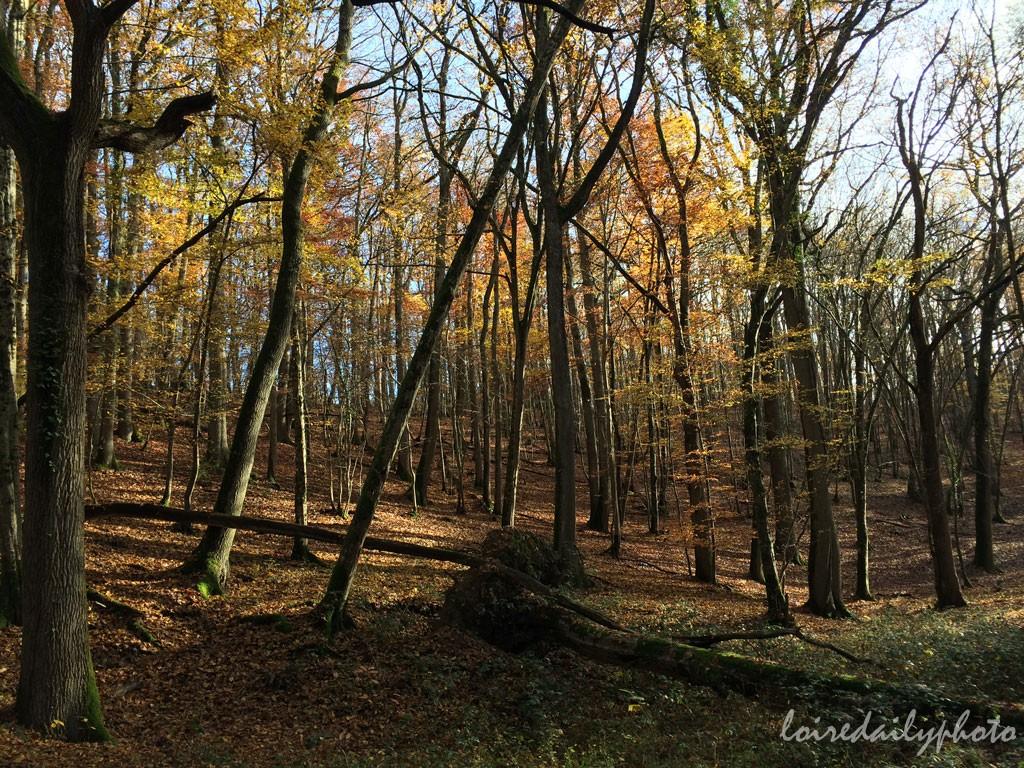 photo_311_forest_november