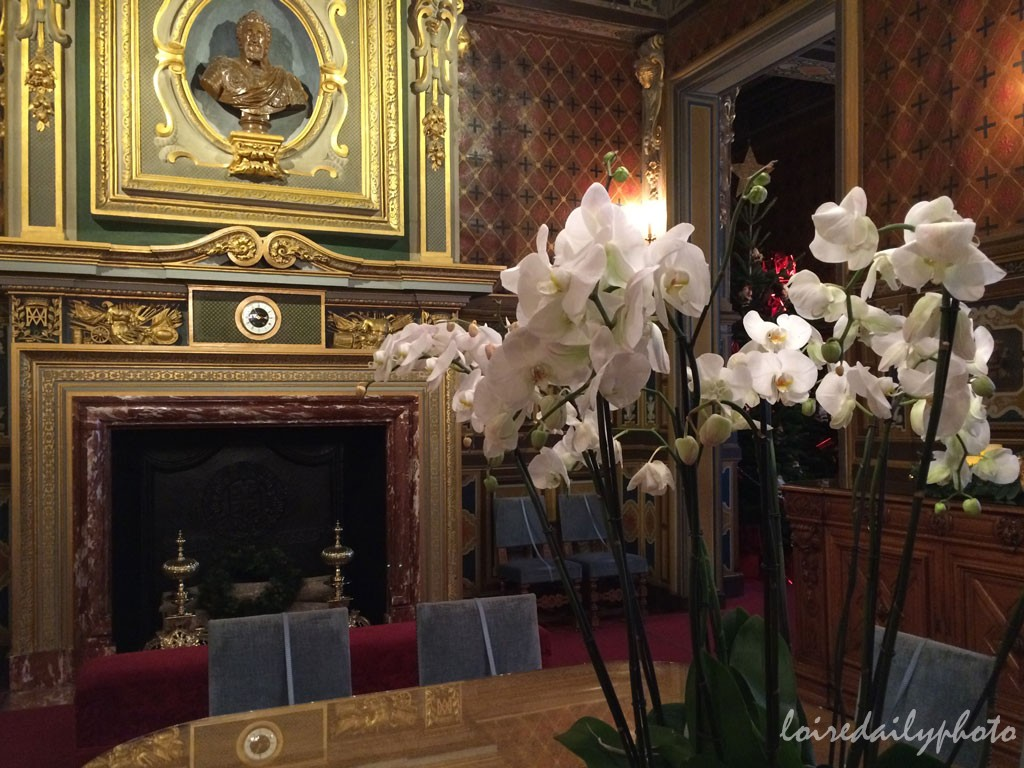 photo_313_orchids_cheverny