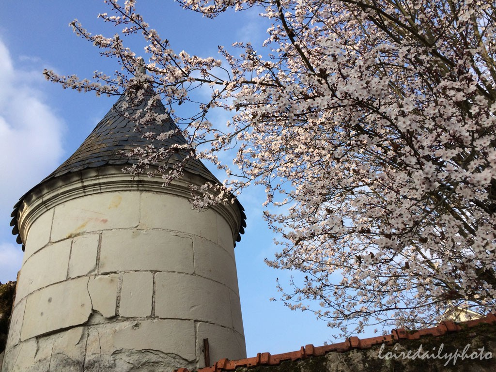 photo_72_spring_blossoms_turret