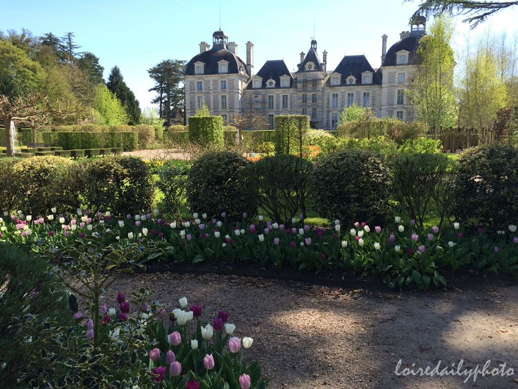 photo_95_tulips_cheverny