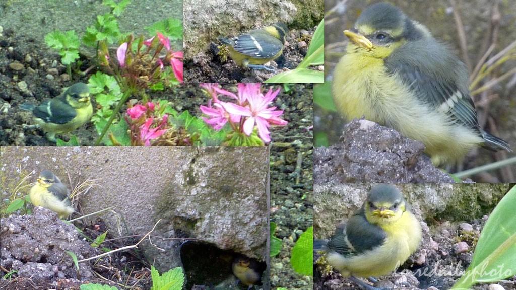 collage_birds