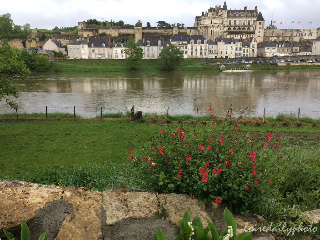 photo_111_lily_valley_amboise