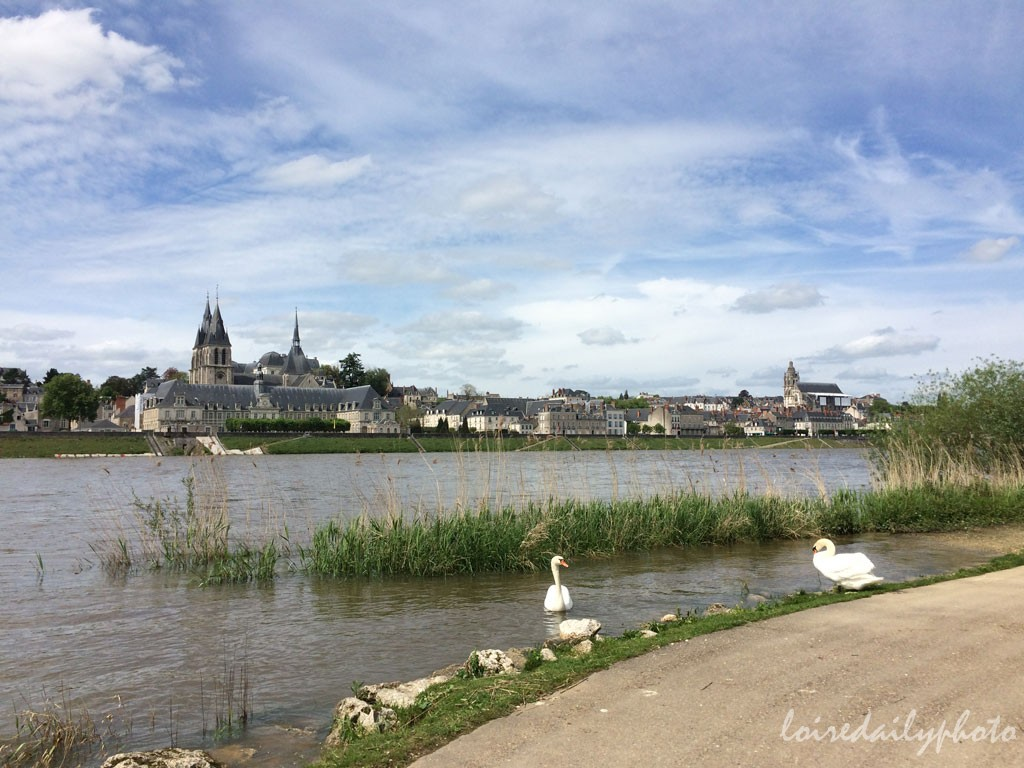 photo_116_loire_swans