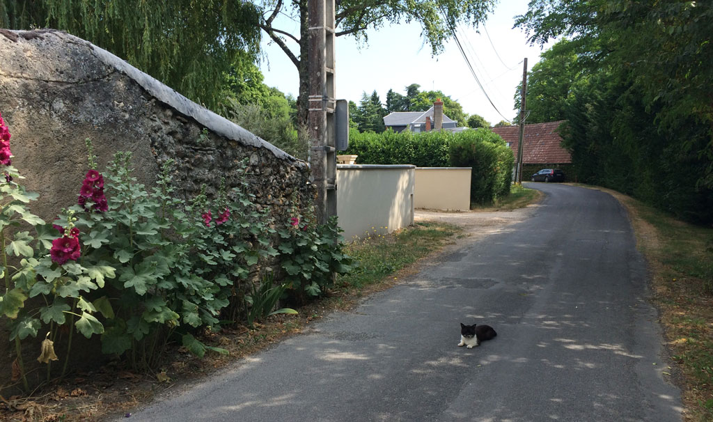 photo_164_cat_road