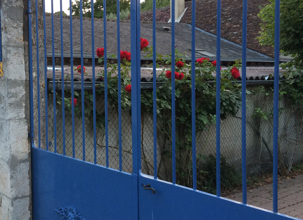photo_174_red_roses_blue_gate