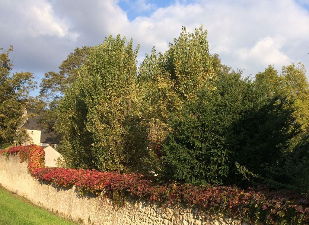 photo_296_autumn_hedge