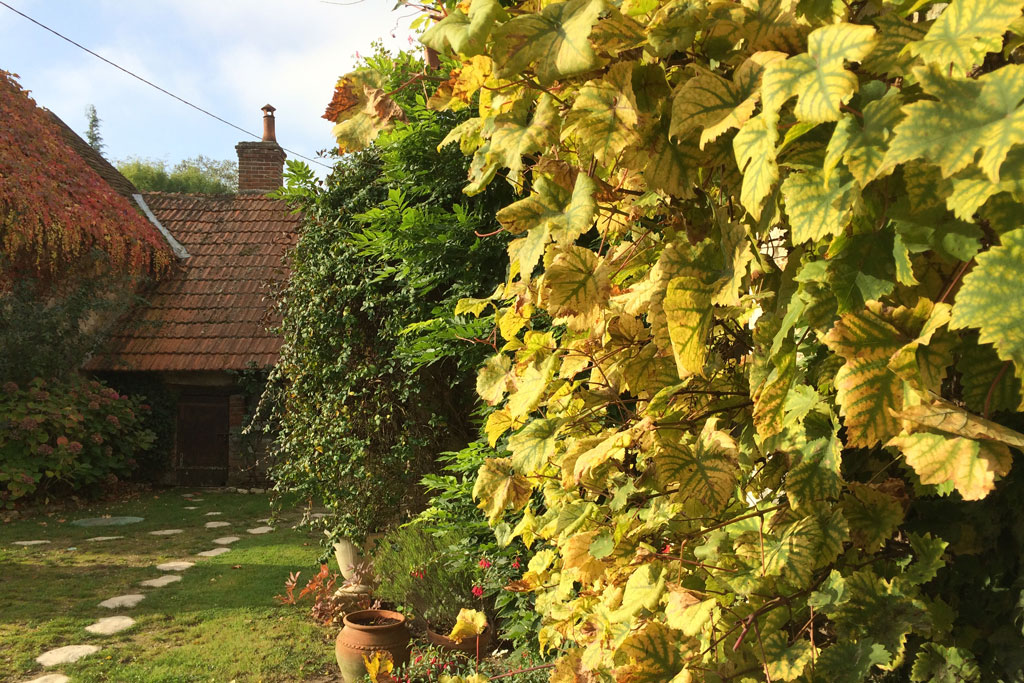 photo_302_autumn_vines