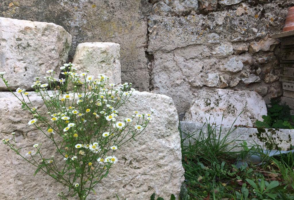 photo_324_bunch_daisies