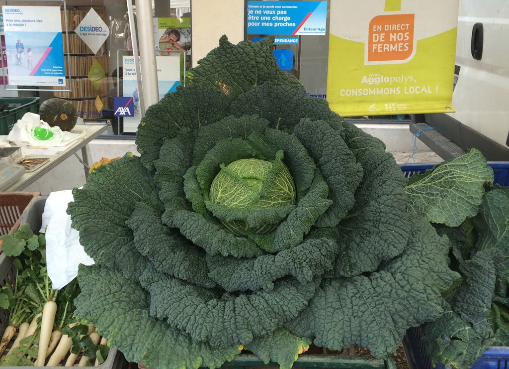 photo_332_big_cabbage