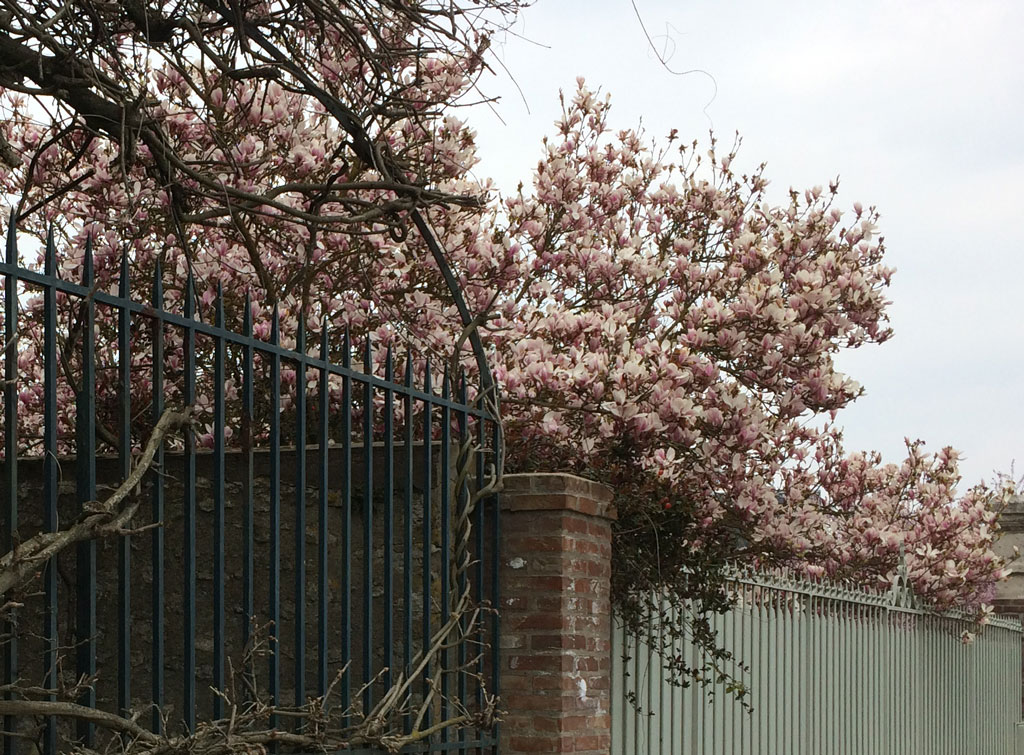 photo_69_magnolia
