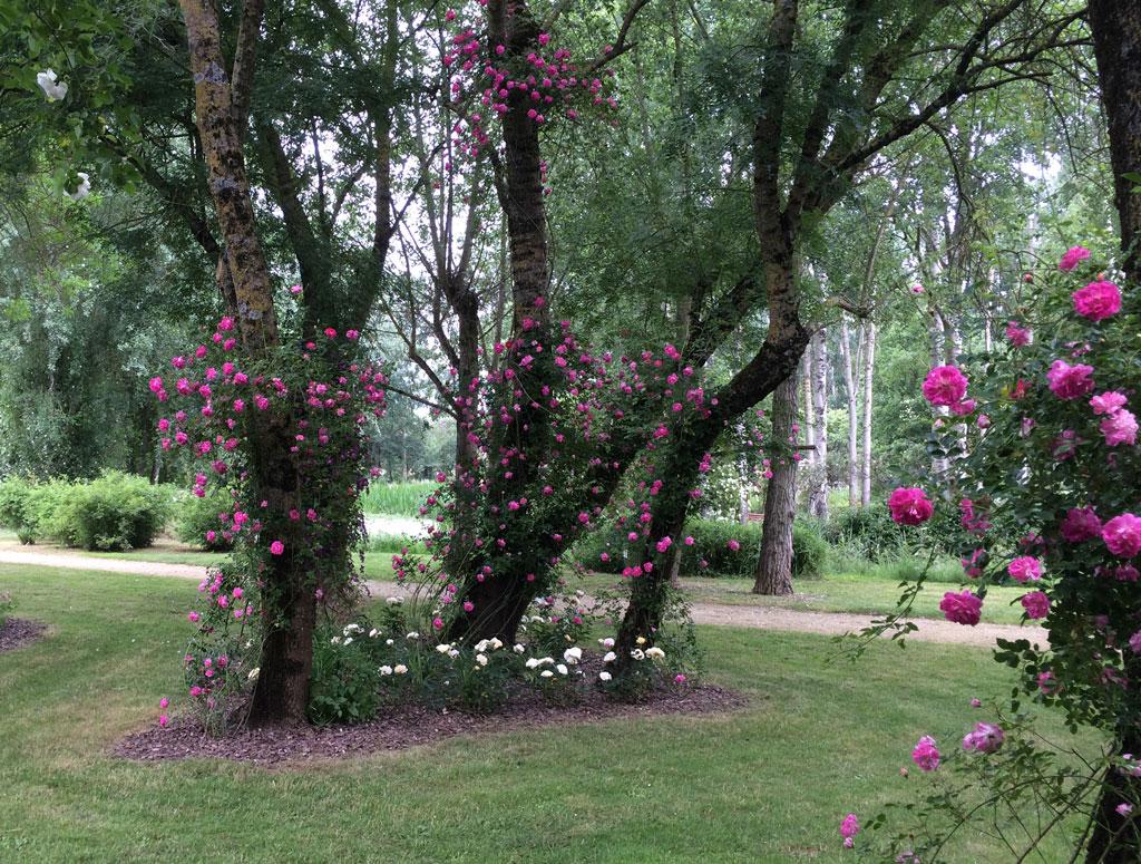 photo_107_jardin_rose