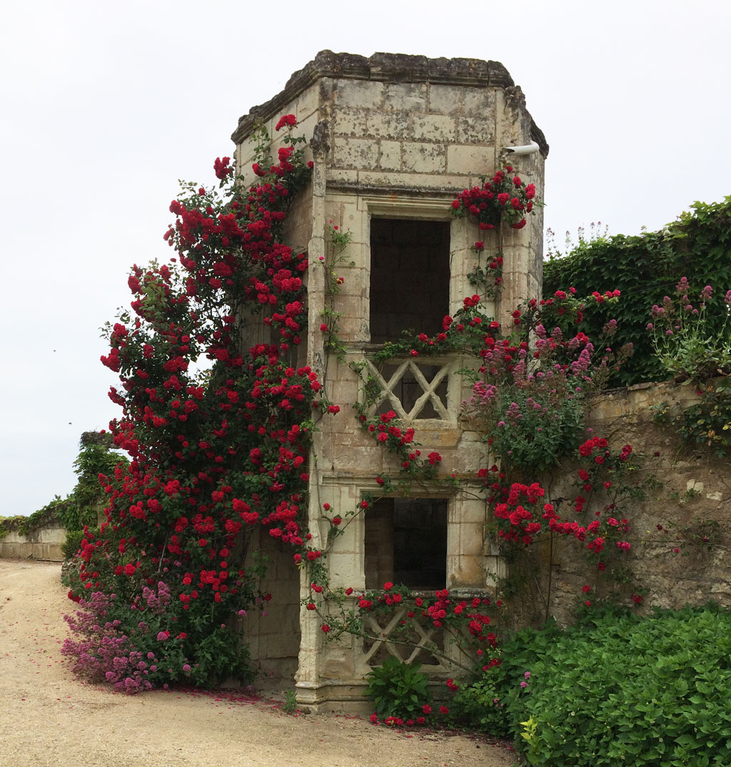 photo_110_tower_roses